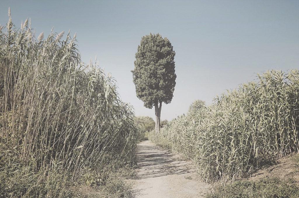 Cascina, lungo l'ansa del fiume Arno – 2018
