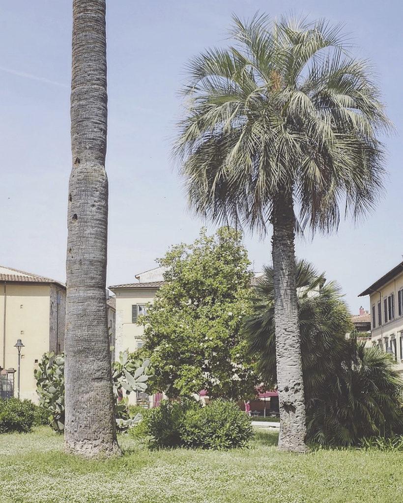 Pisa – 2018